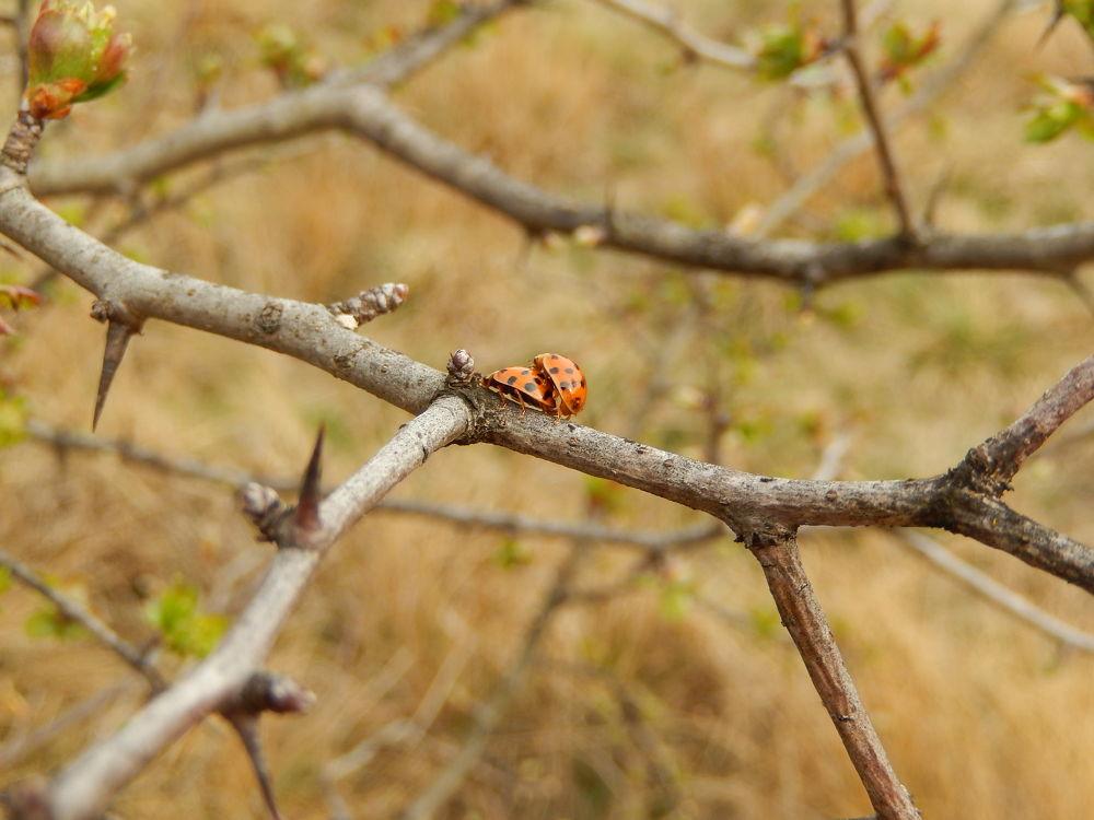 springtime by denise_ro