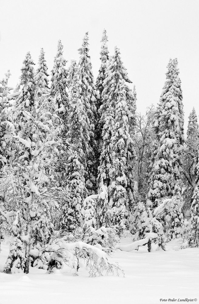 White snow on black forest by aplog1