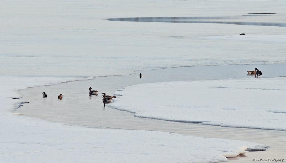Photo in Nature #nature #ice #animals #birds #art #shapes #colours #taiga #lappland #climate #snow #spring #water