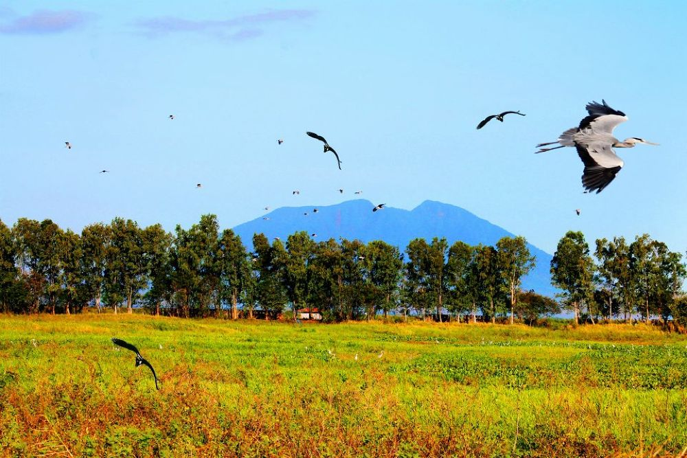 Migratory Birds of Candaba, Pampanga, Phillipines by Eds Balajadia