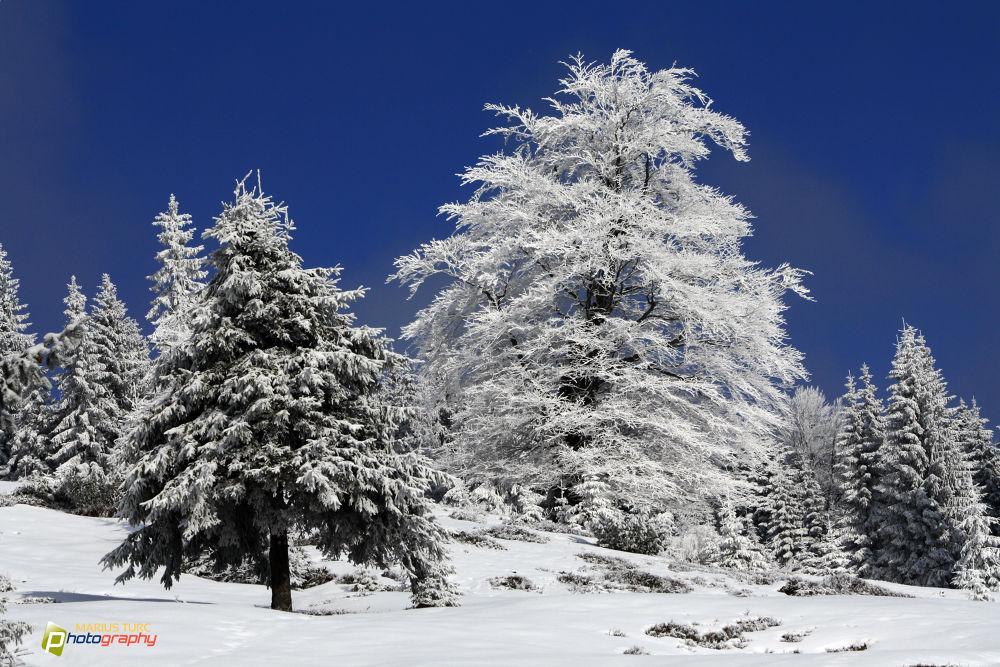 Photo in Landscape #winter #snow #blue #frozen