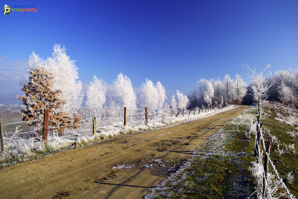 Frosty day by TurcMarius