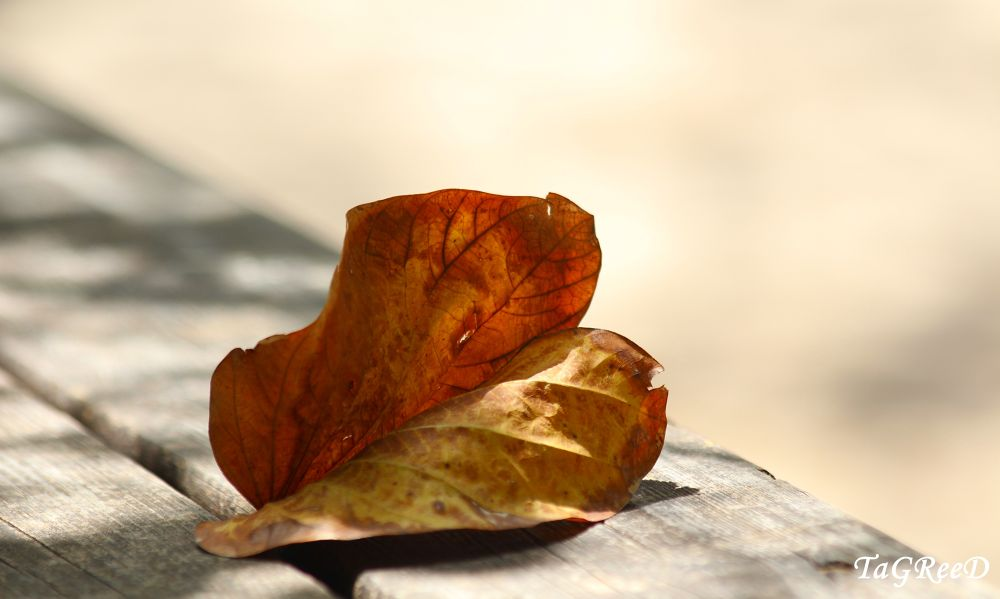 autumn leaves by TaGReed