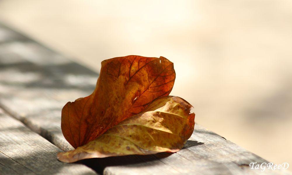 Photo in Random #autumn leaves