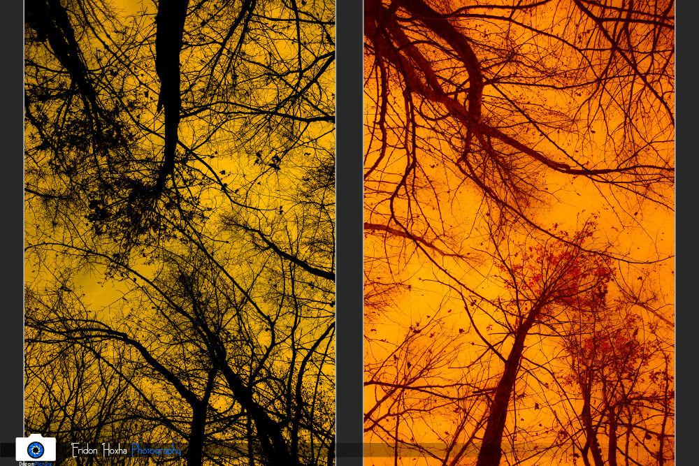 Dominance of the Nature by Eridon Hoxha