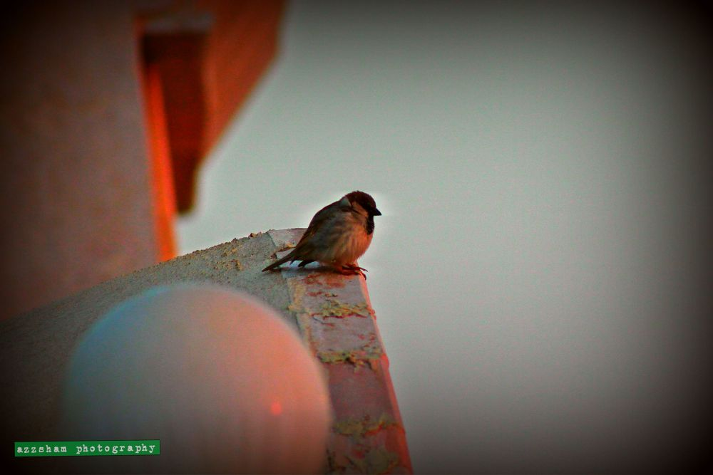 my eyes captured a beautiful bird. by azzsham