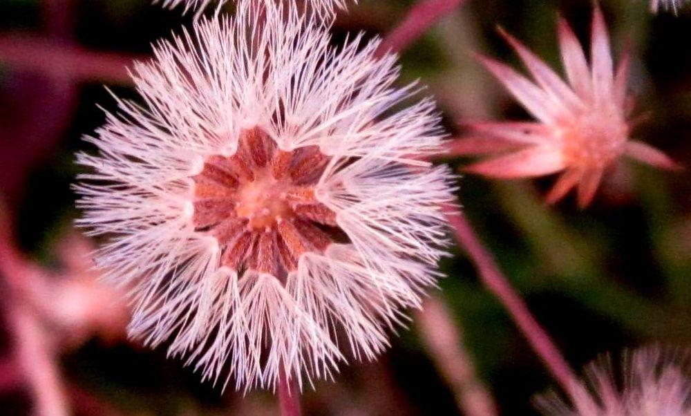 phu02  the flower by CKKALLOLI