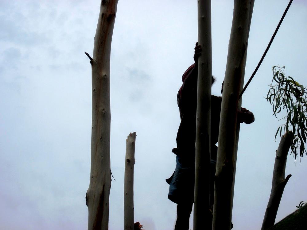 IMG_2728-death of a tree-2 by CKKALLOLI