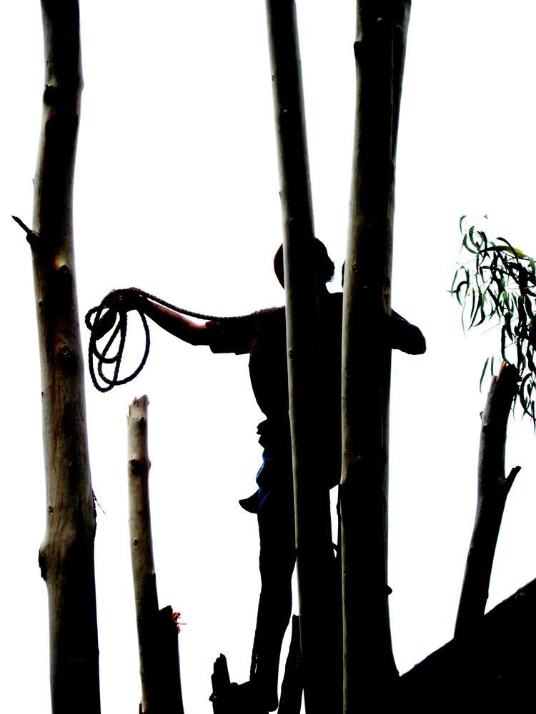 IMG_2727-death of a tree-1 by CKKALLOLI