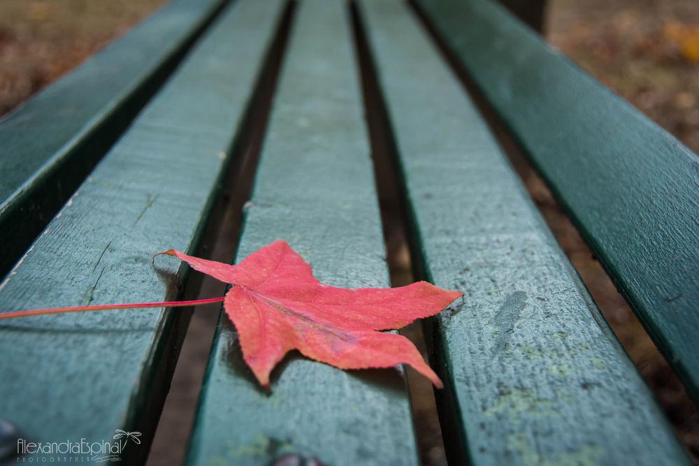 Photo in Macro #macro #nature #flor #otoño #solitaria #solita