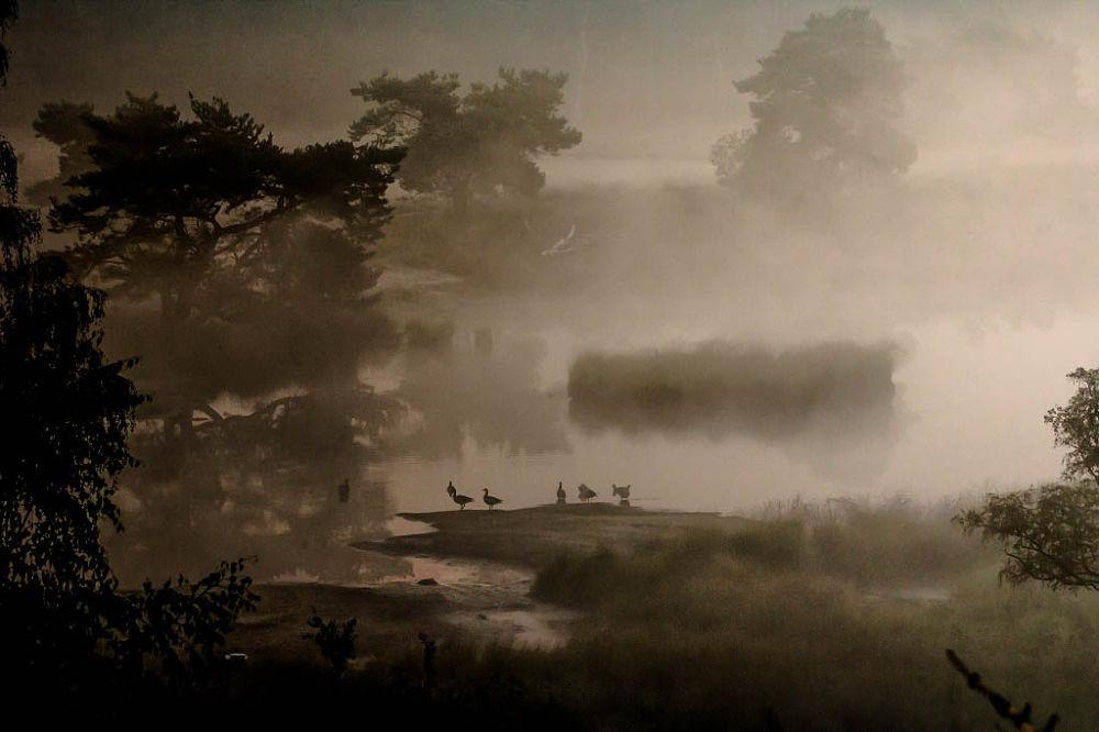 misty morning National park Maasduinen Afferden Netherlands by Theo Hermsen
