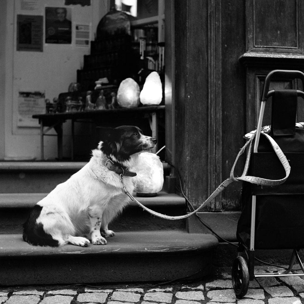 Photo in Street Photography #dog #hund #marburg #medium format #trix 400 #rolleicord #www.weschta.eu