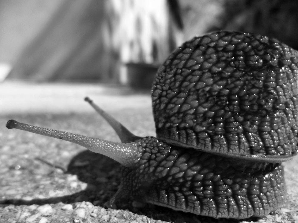 snail by Manuela Bezer