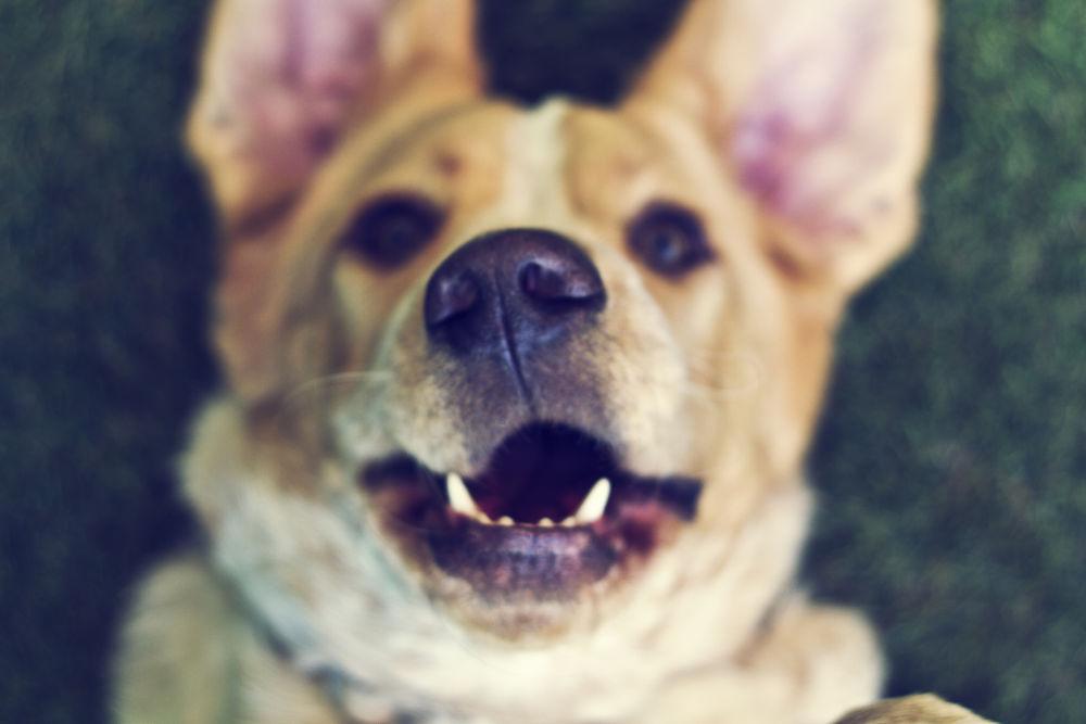 Photo in Animal #dog #perro