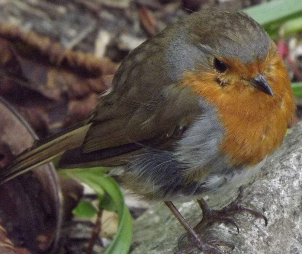 2 july a very round robin by boatystevegraphics