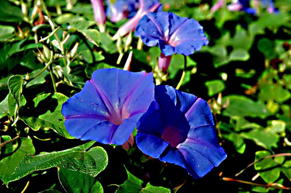 Violet flowers by Tassos Datsis