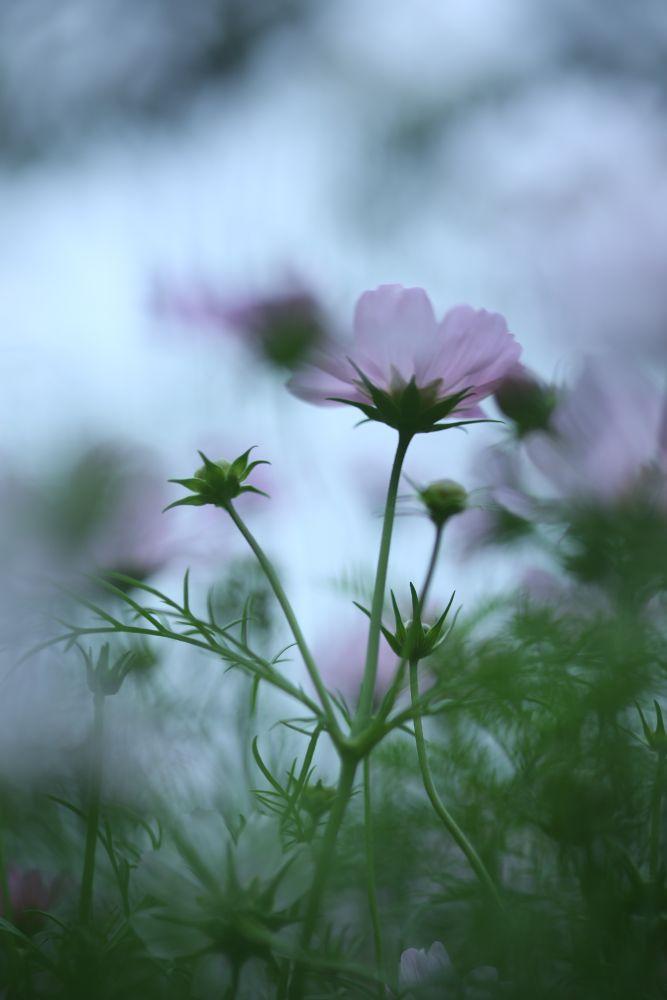 IMG_0250 by Cheng Cho Yau Joe