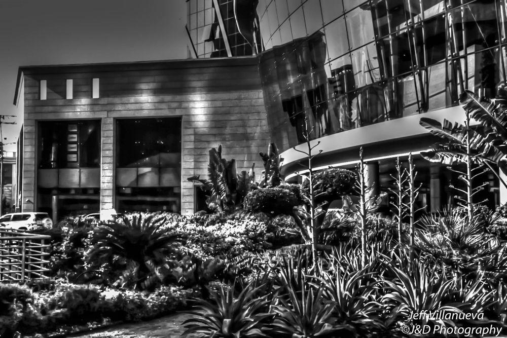 The Garden by Jeff Tubalado