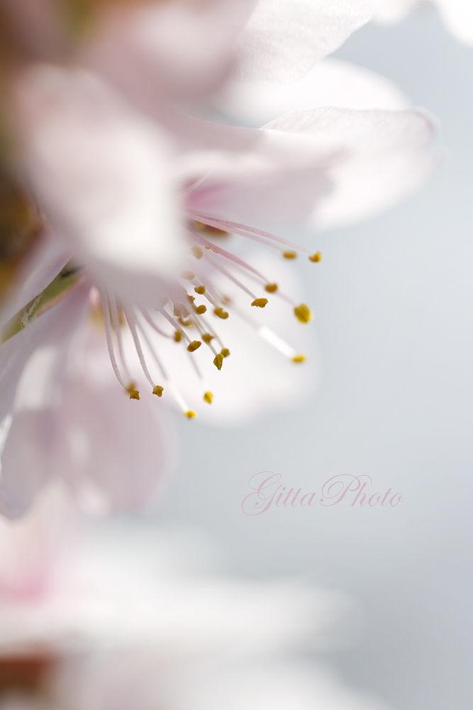 spring (2) by gittakalmar