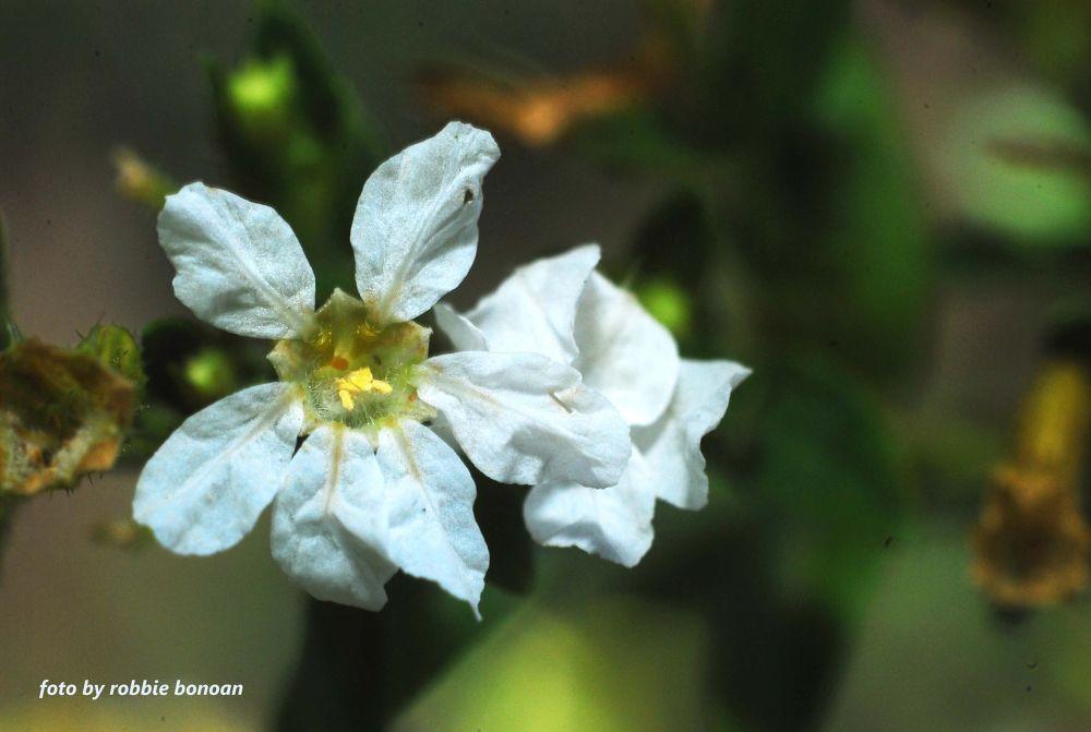 Flower6 by Robbie Bonoan