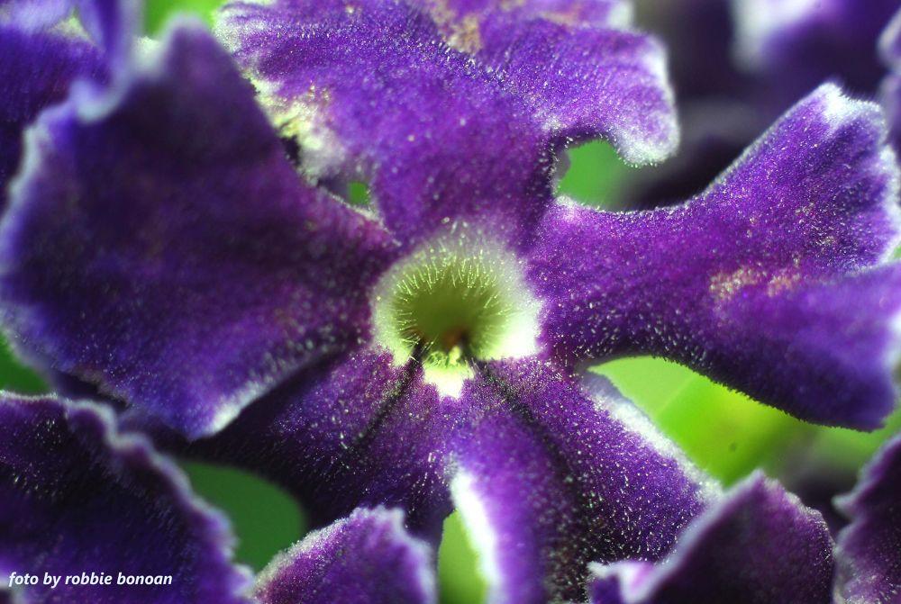 Flower8 by Robbie Bonoan