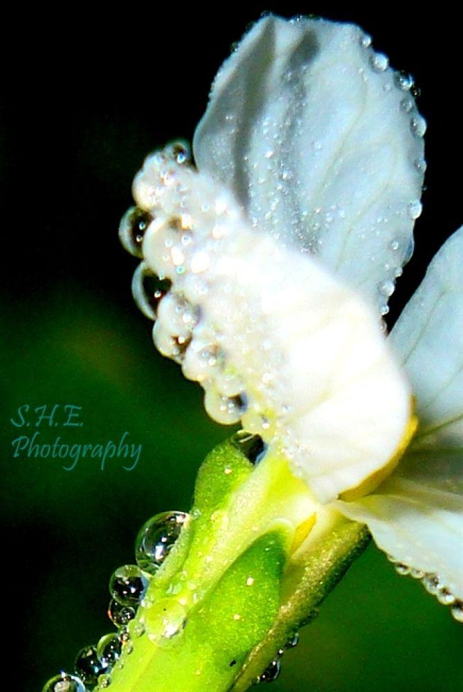 SHE Photography 160 by emonsam