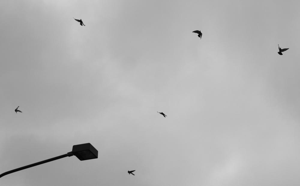 Eilis - Freedom by IMMAGINANDO