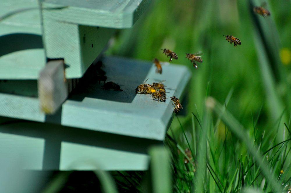 Bees by DarekSycz