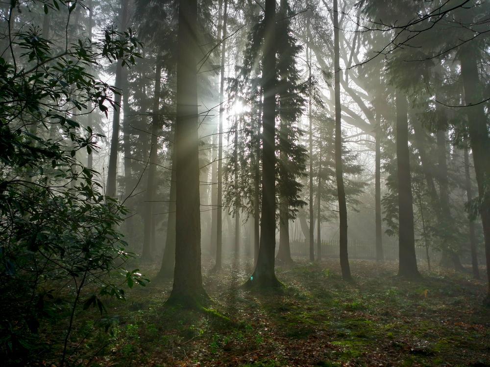 Forest 4 by DarekSycz