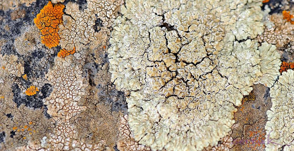 _SER3053-textures by Sergey Hakobyan