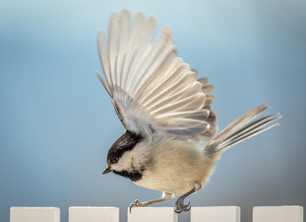 Bird Dance by Bill Killillay