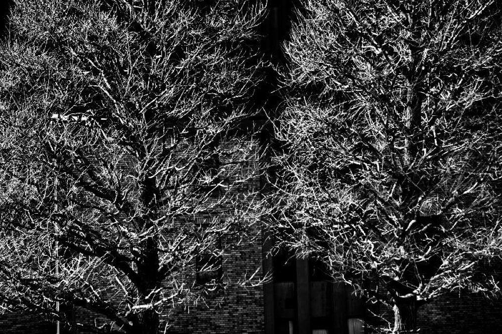 樹木 by Kenji Ishida