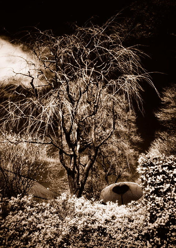 桜の木 by Kenji Ishida