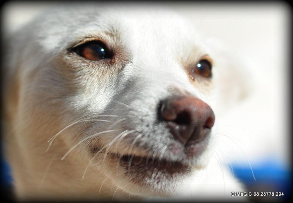 Photo in Animal #dog #animal #white #pet