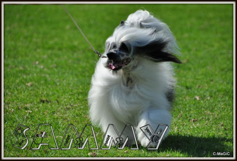 Sammy by ClaraMaGiC