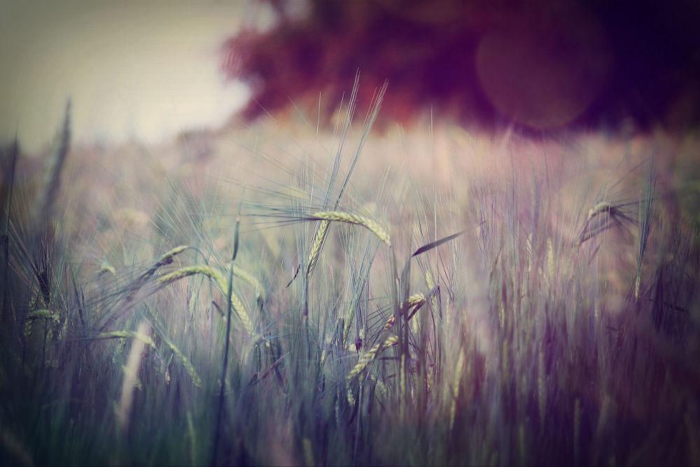 Lovely field by nikitatomanova