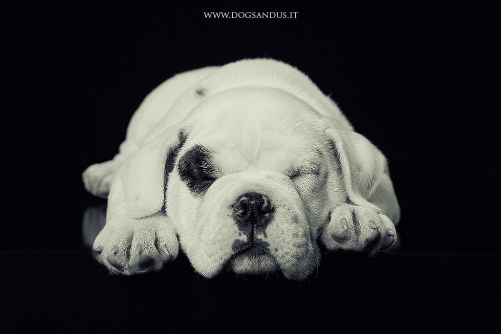 Puppy by marioforcherio