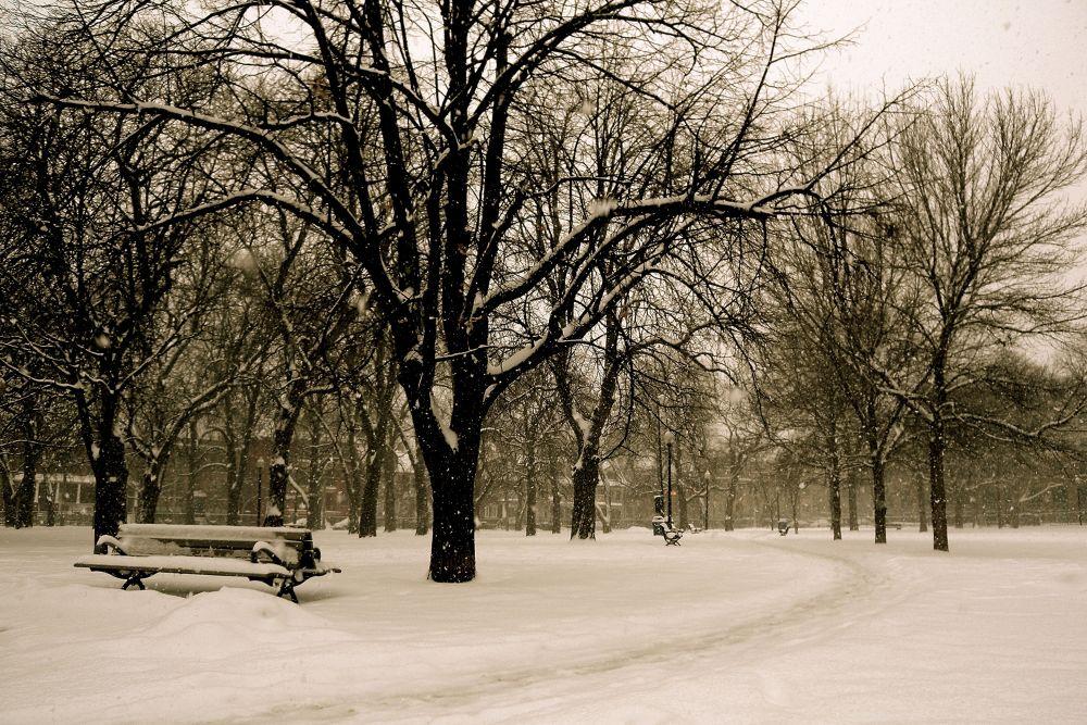 Early February snowfall by leo_li