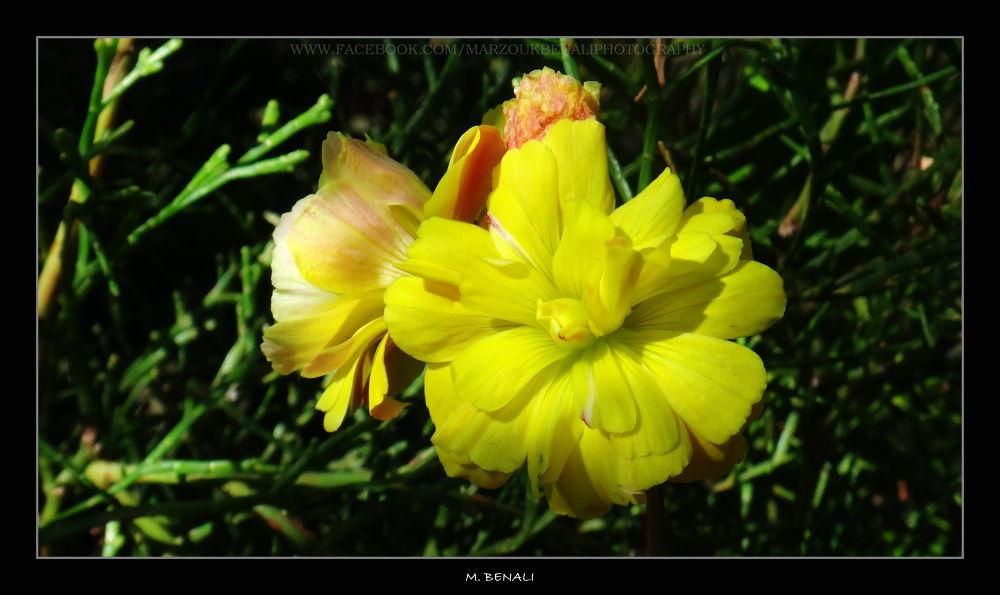 زهور وحشرات # 35 by Marzouk Benali