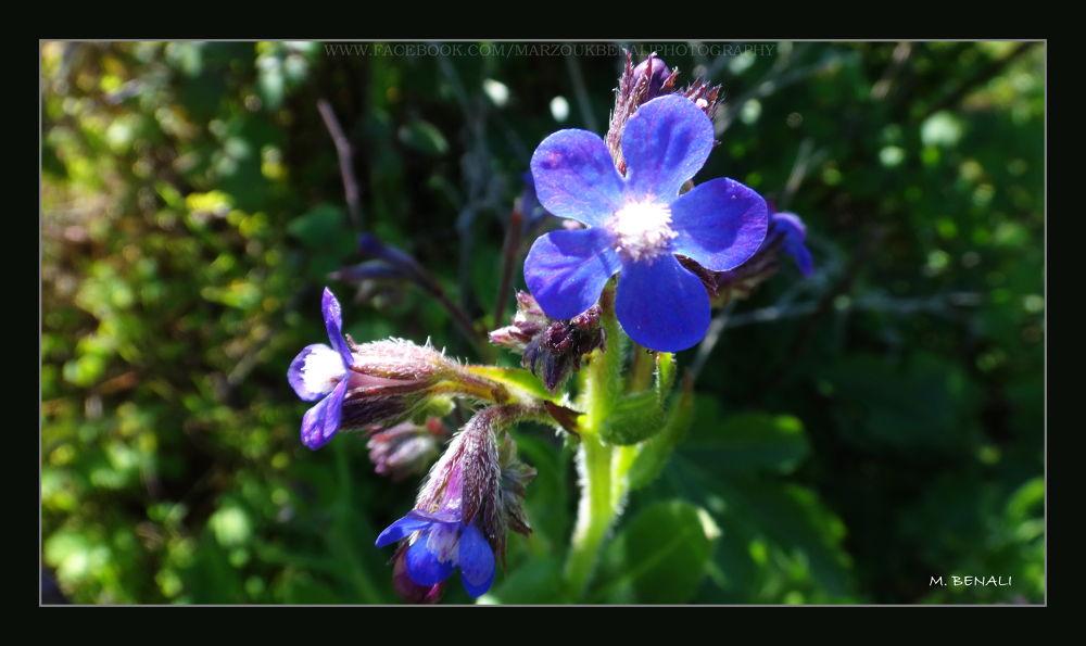زهور وحشرات # 44 by Marzouk Benali