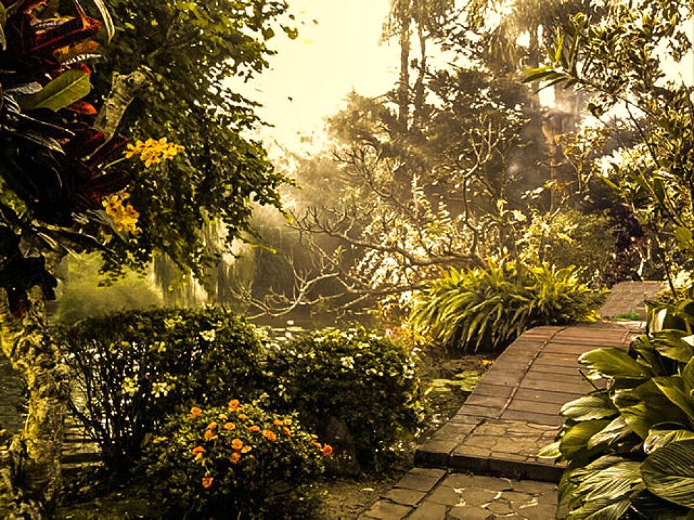 flower garden on Mount Salak, West Java, Indonesia by IwanZazuli