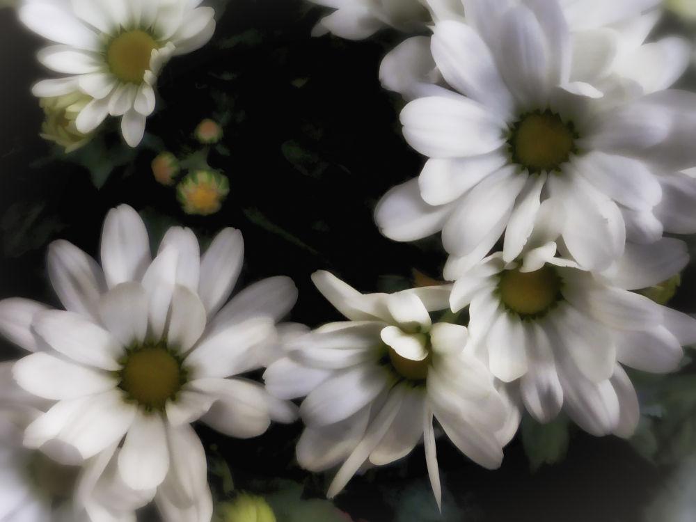 whites.jpg by dexter_66