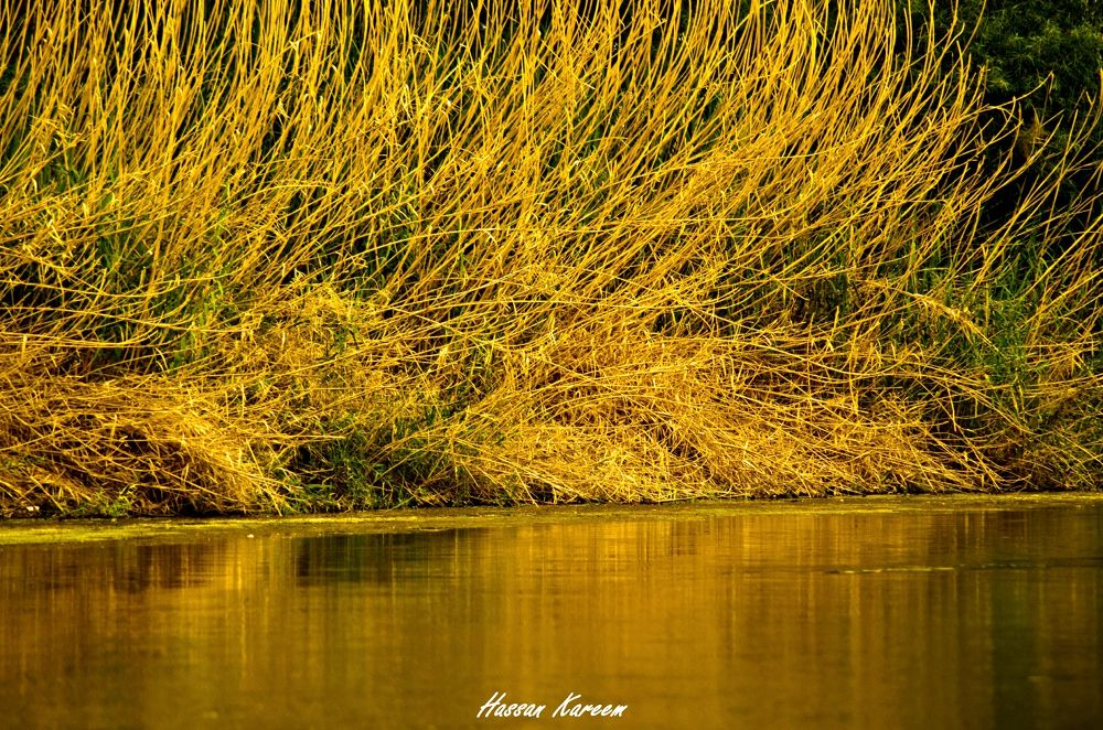The Quiet Soul Hears it All ! by Hassan Abdul-Kareem