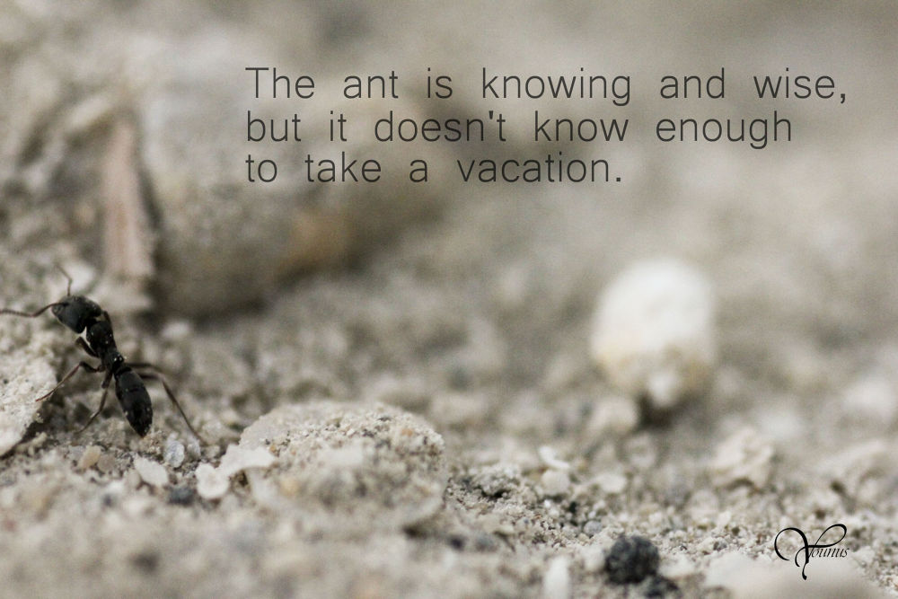 Ant by uns
