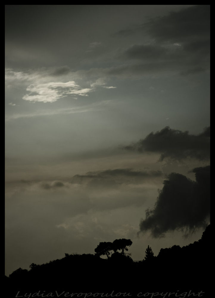 Trees sunset by lydiavero