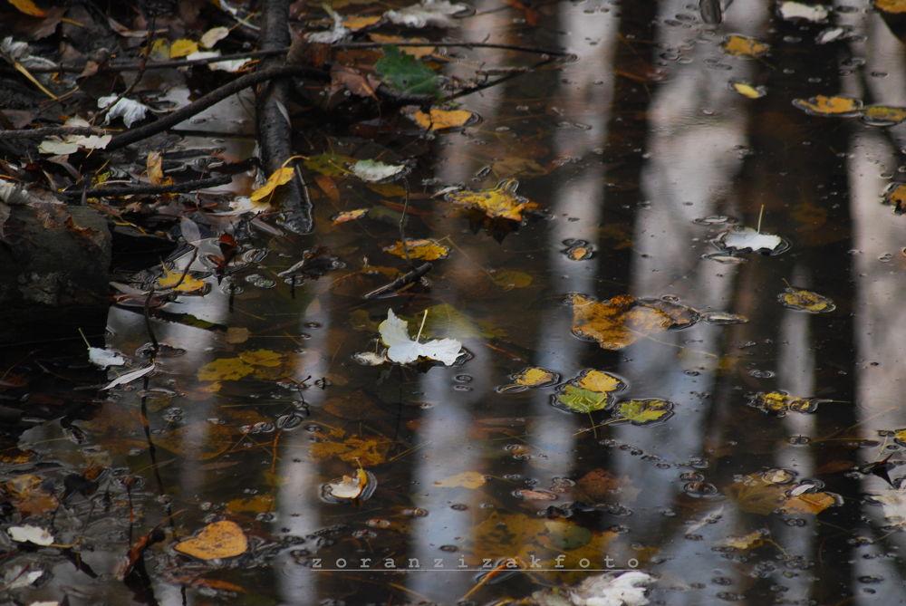 autumn by Zoran Žižak