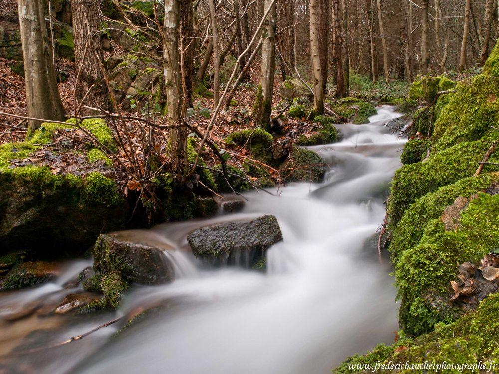 ruisseau dans les sous bois by Frederic Banchet