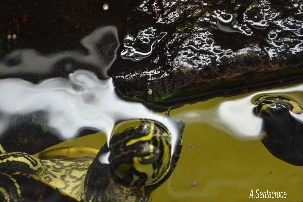 La tartaruga che fuma... by Antonella Santacroce
