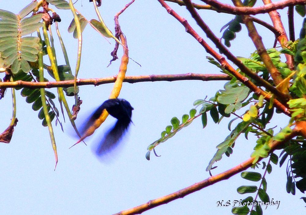 A Sunbird flying away by Narayan Sarma