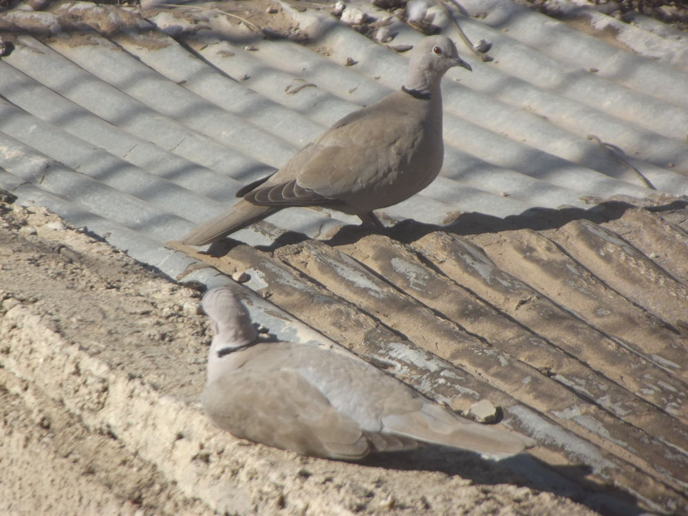 birds by timizar